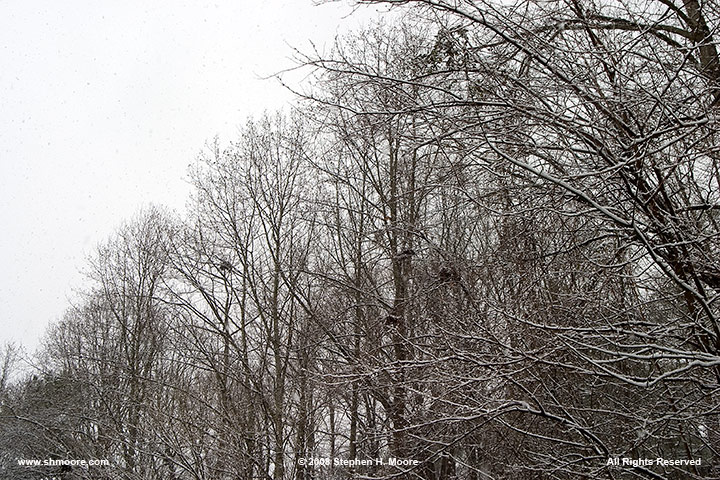19-January-2008-Snow-Day--24.jpg