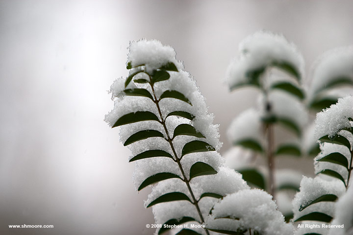 19-January-2008-Snow-Day-1.jpg