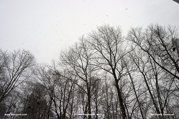 19-January-2008-Snow-Day-6.jpg