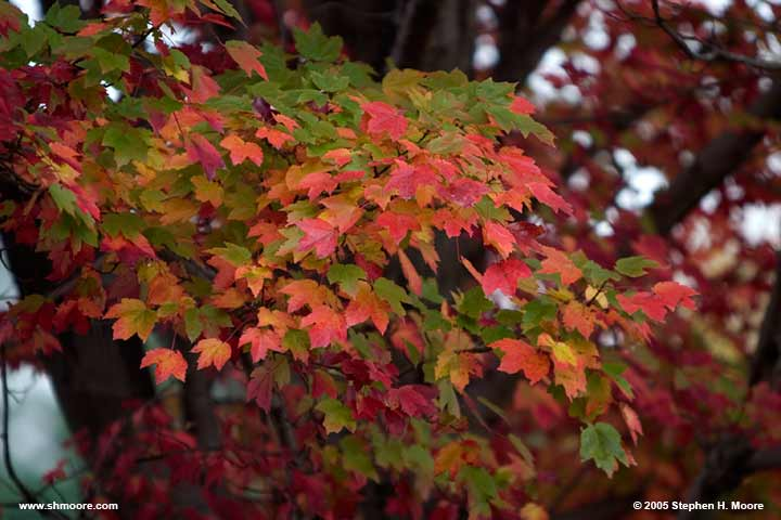 2005 More Fall Color (web) CRW_9901.jpg