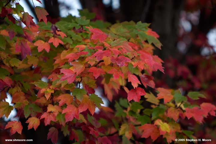 2005 More Fall Color (web) CRW_9904.jpg