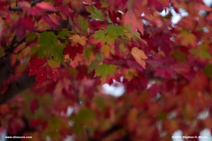 2005 More Fall Color (web) CRW_9910.jpg