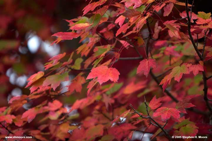 2005 More Fall Color (web) CRW_9912.jpg