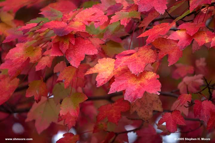 2005 More Fall Color (web) CRW_9916.jpg