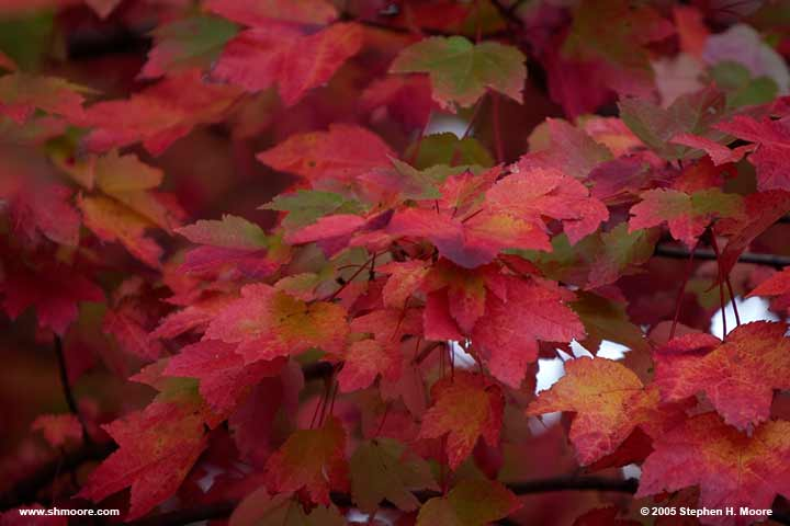 2005 More Fall Color (web) CRW_9919.jpg