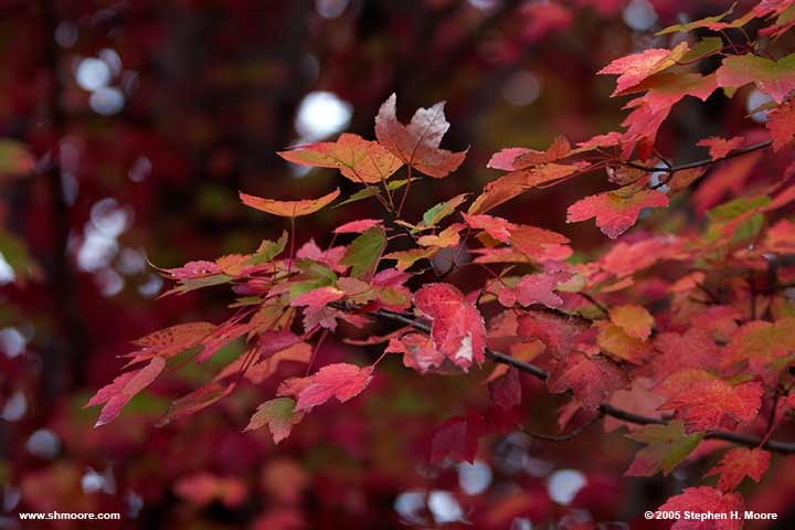 2005 More Fall Color (web) CRW_9920.jpg