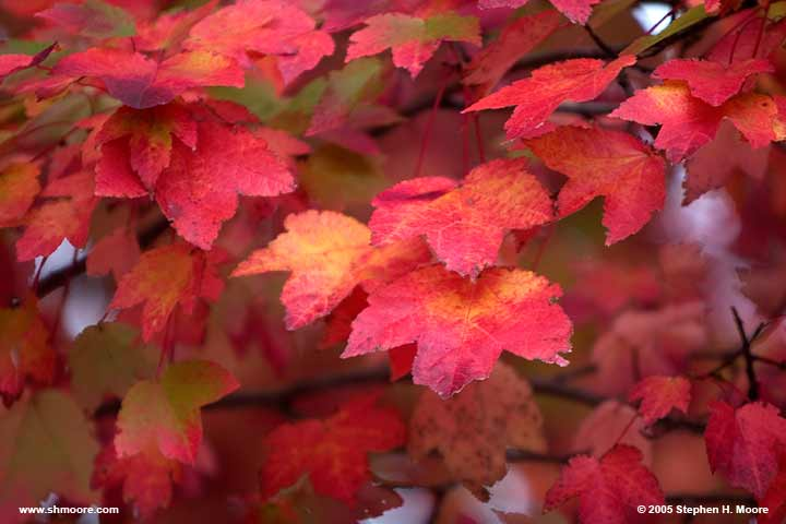 2005 More Fall Color (web) CRW_9926.jpg