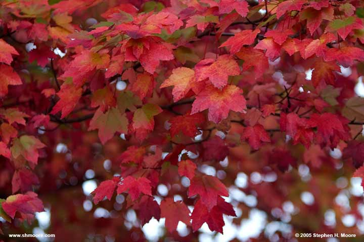 2005 More Fall Color (web) CRW_9927.jpg